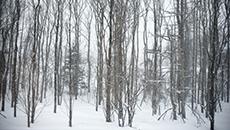 HRP - Winter Classics - THUMB.png