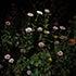Stick_Jason_1_Flowers.jpg